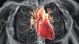 Поражение клеток сердца