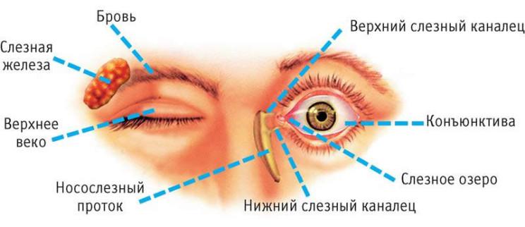 Схема рака глаза