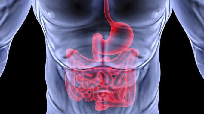 Наглядное изображение кишечника человека
